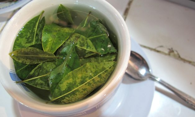 Drinking Coca Tea and Drug Test Results
