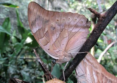 Pilpintuwasi Butterfly Farm in Iquitos
