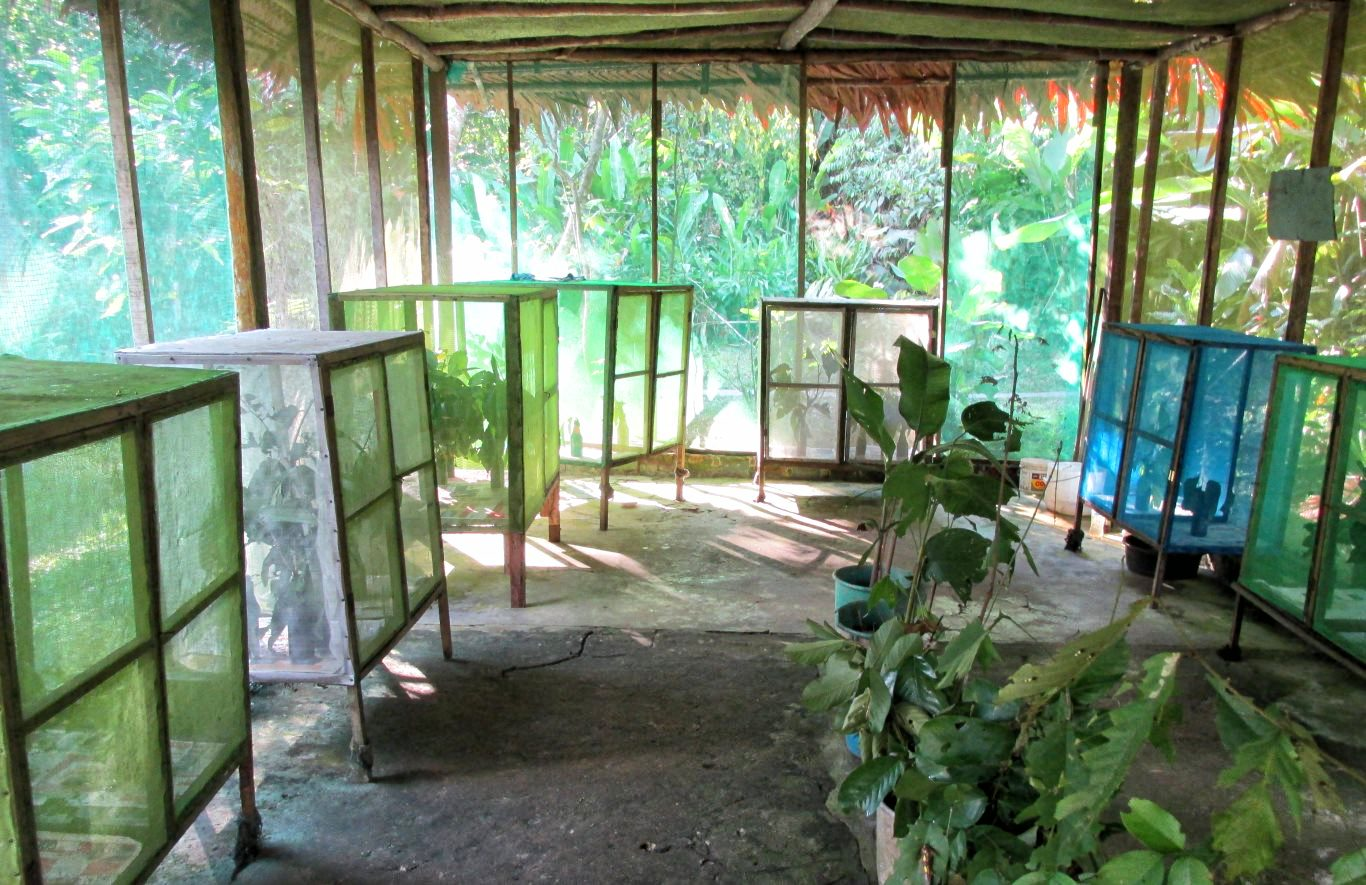 Inside the Butterfly hatchery at Pilpintuwasi Butterfy Farm