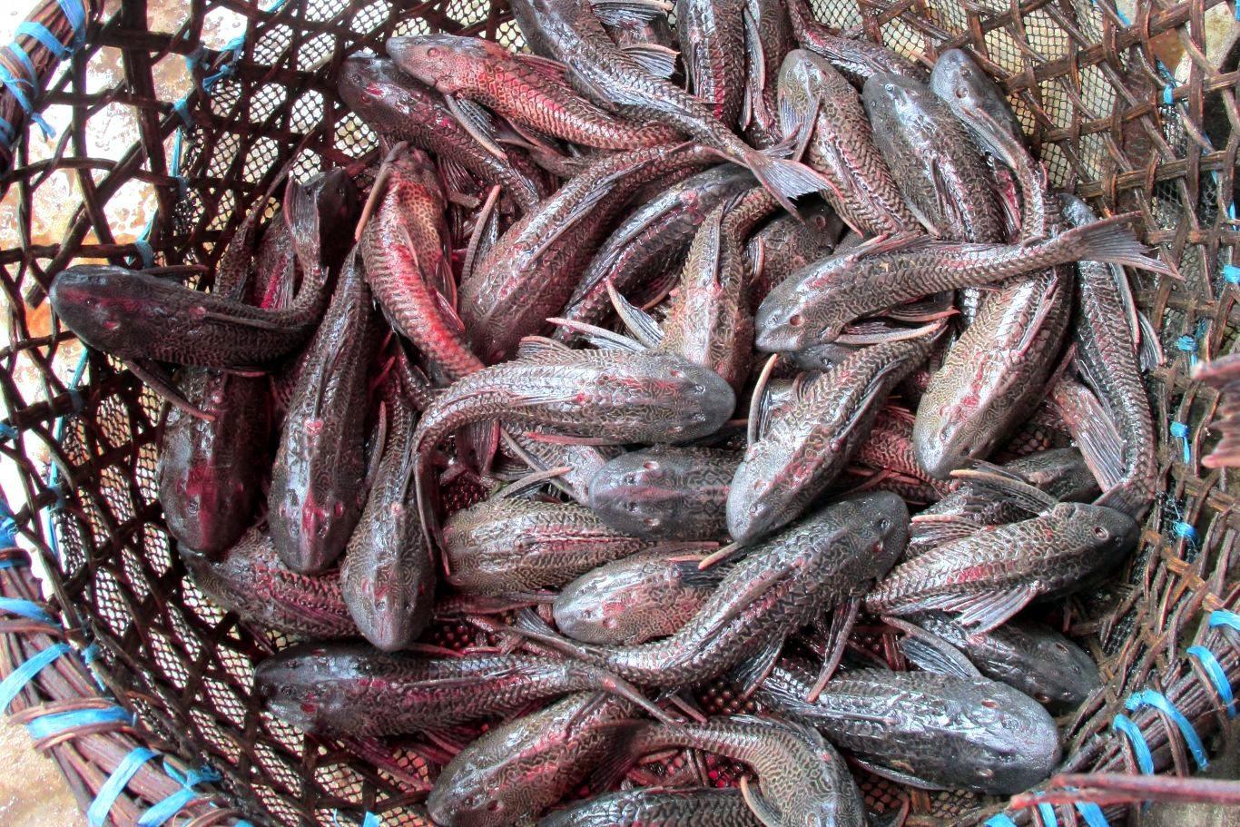 Northern Peru: food
