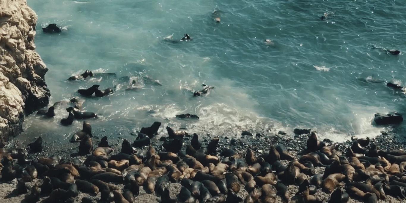 Sea lions at Isla Foca, Piura